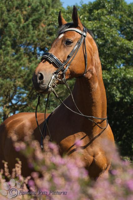 Paard met bling frontriem